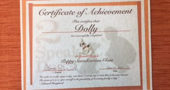 Dolly's diploma